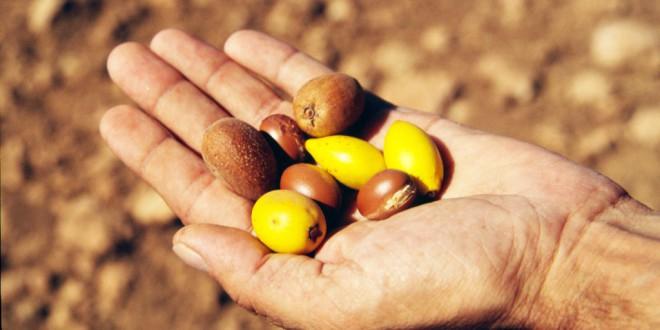Аргановое масло - полезные свойства и применение