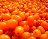 приготовление облепихового масла в домашних условиях