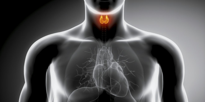 Эндокринология и метаболизм